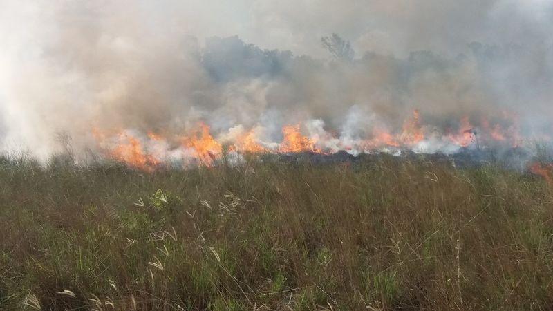 Feuerwalze zerstört Graslandschaft