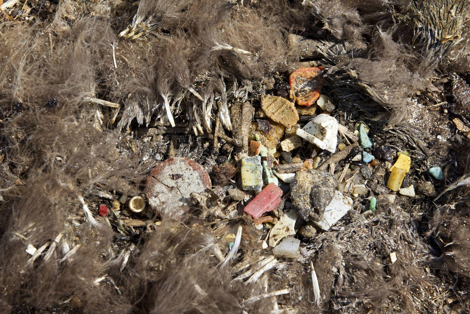 EINMALIGE VERWENDUNG Vogel/ Magen/ Plastik
