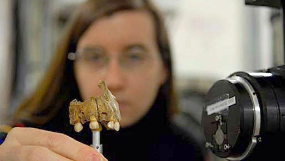 Neandertaler: Frühmenschen auf den Zahn gefühlt