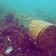 Zeitbomben am Meeresboden