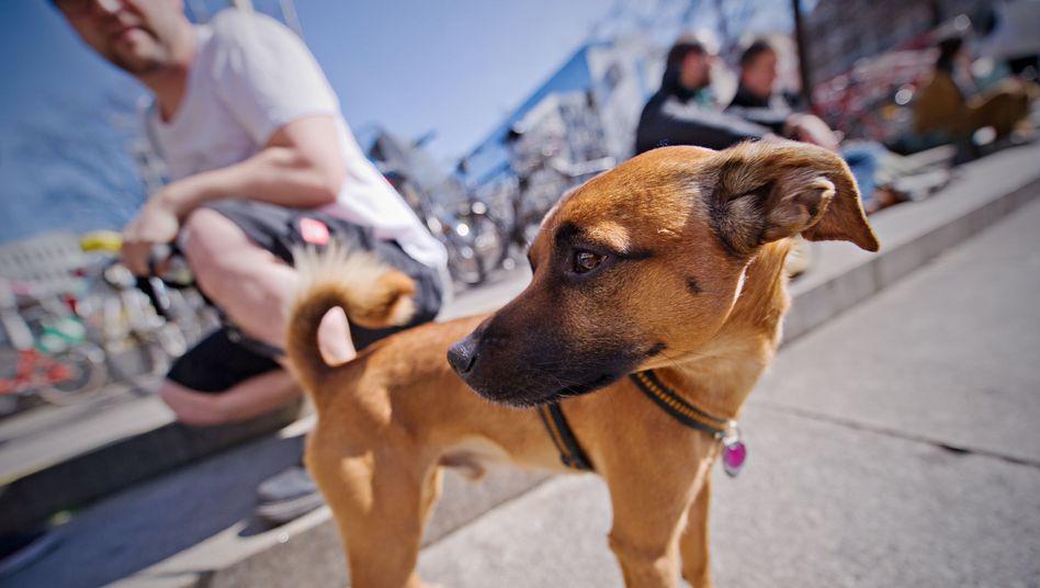 Hund Pico: Sein Besitzer soll 100 Euro Bußgeld zahlen