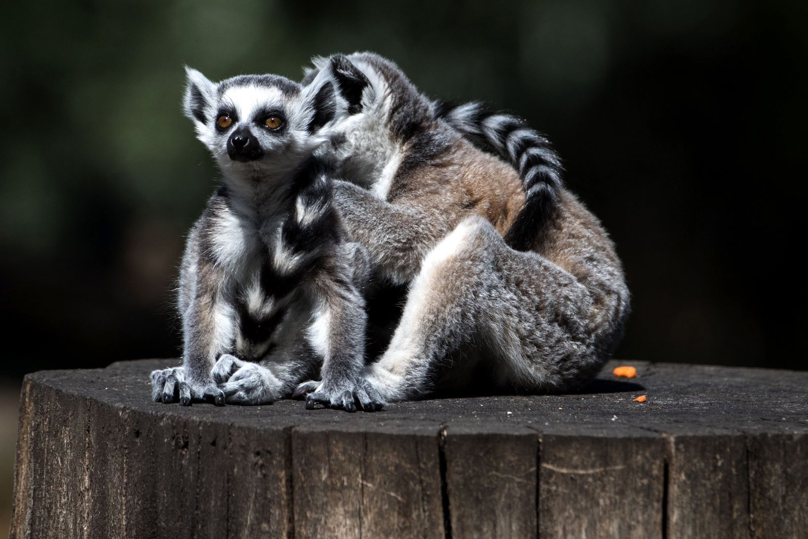 FRANCE-ANIMALS-ZOO-THOIRY
