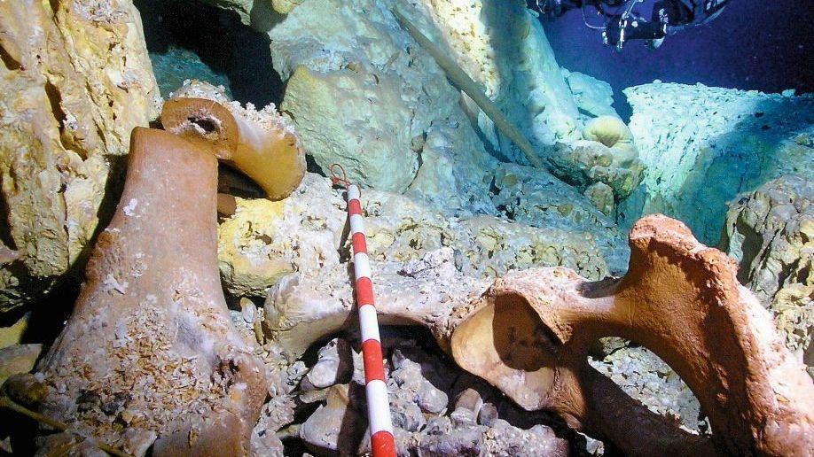 Höhlentaucher, Mastodonknochen