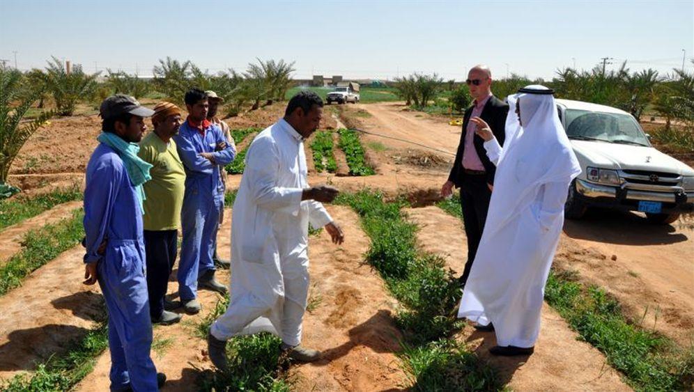 Kulturschock in Saudi-Arabien: Bio-Mangos in der Wüste