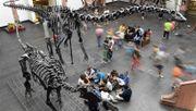 So wird ein Dino zusammengesetzt