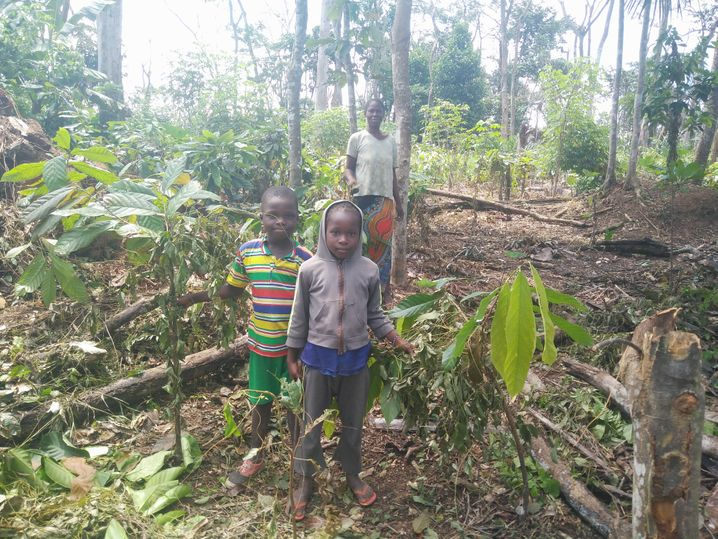 Kakaoplantage in der Elfenbeinküste: 2,26 Millionen Kinder sind in der Kakaoproduktion beschäftigt