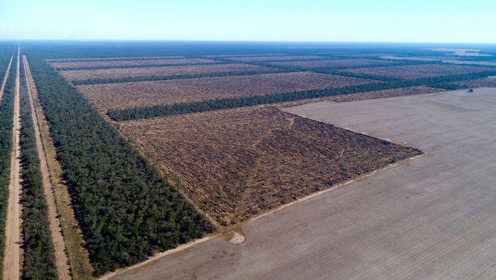 Sojaanbau in Argentinien: Hier wird Urwald für den Sojaanbau gefällt