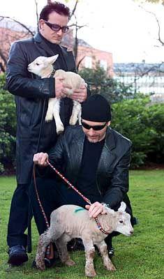 Freeman Bono und sein Gitarrist Edge auf der Weide