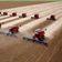 WeltweiterSojaanbau nimmt stark zu