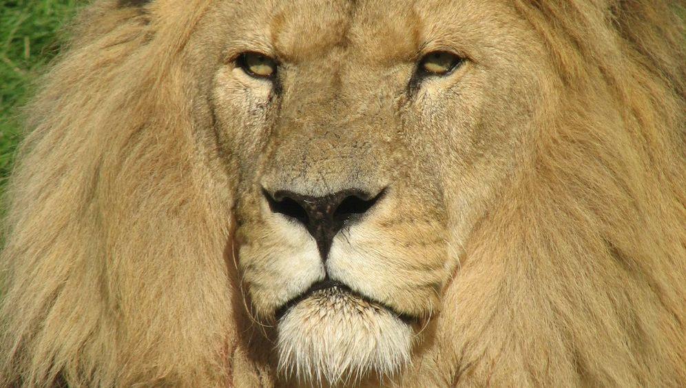 Bedrohte Arten: Auf der roten Liste