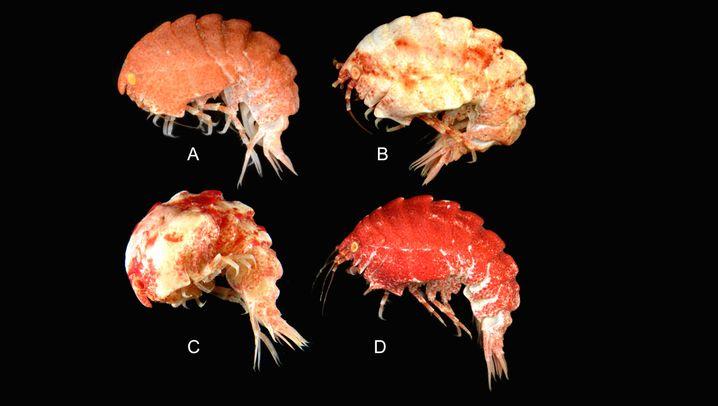 Top-Ten-Liste: Das sind die schrägsten neuen Arten