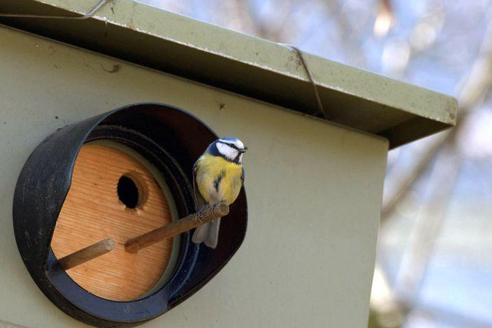 Blitzgerät als Vogelhäuschen: Nach drei Monaten ist es für die Behörden zu spät