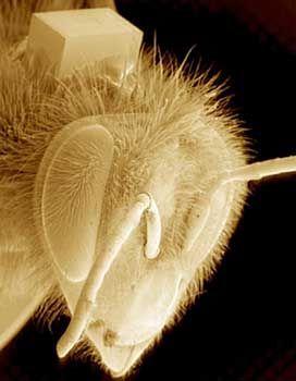 RFID-Chip in der Verhaltensforschung: Eine Technik, mit der sich Bienen überwachen lassen, könnte das auch mit Bürgern