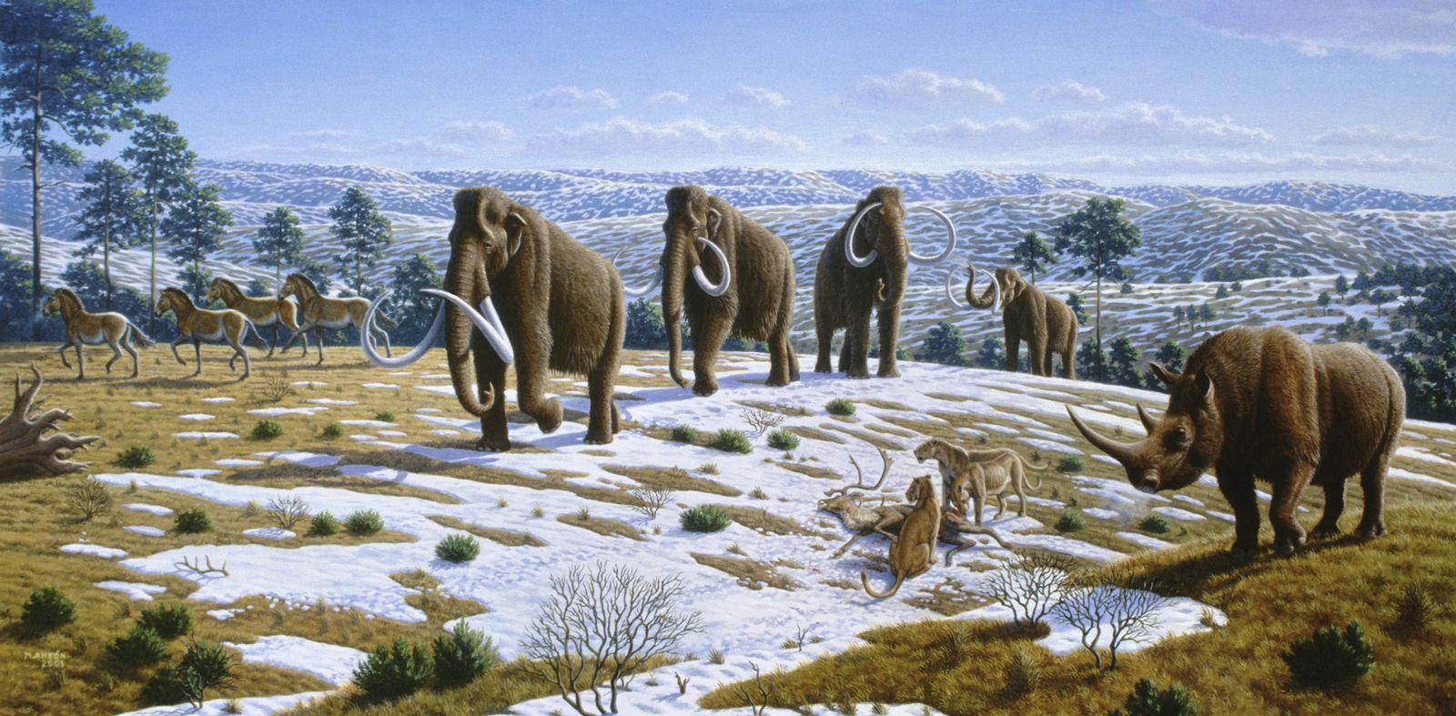 NICHT MEHR VERWENDEN! - Mammut