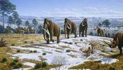 Gingen Mammuts an Inzucht und Stress zugrunde?