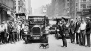 Wie eine Katze, äh ..., ein Fotograf in New York den Verkehr aufhielt
