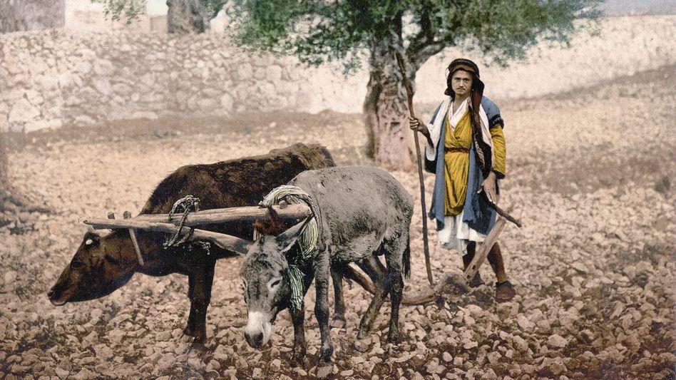 Ein palästinensischer Bauer pflügt mit Rind und Esel, Marktszene beim Jaffa-Tor in Jerusalem Fotochrome, um 1900