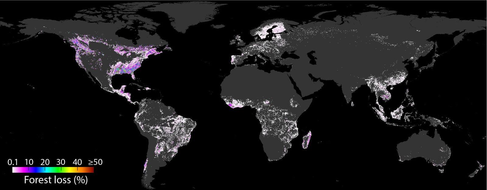Dossier: Vier Bäume pro Kopf: Wo unser Konsum wie viel Wald verni