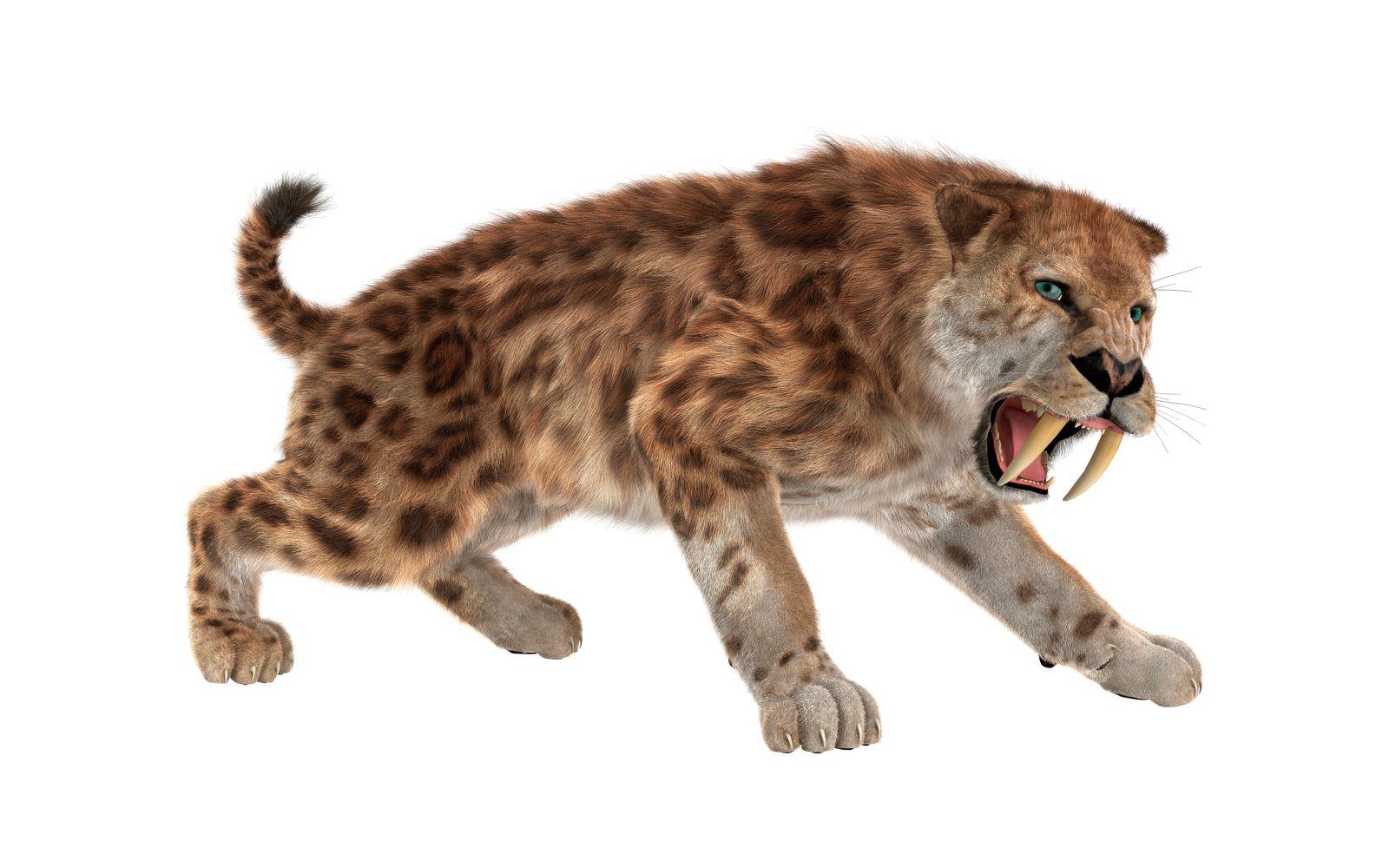 3D rendering sabertooth tiger on white