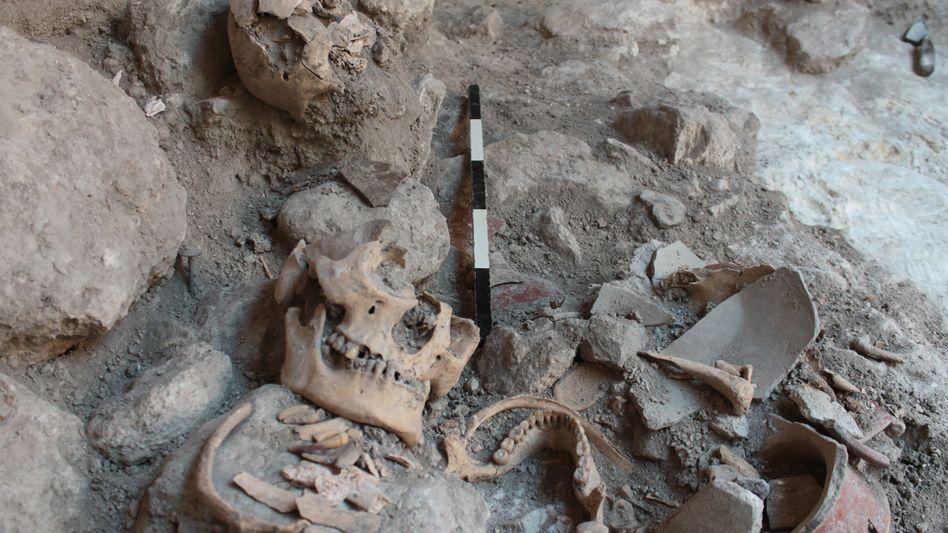Die Zähne verrieten die Herkunft der Menschenopfer