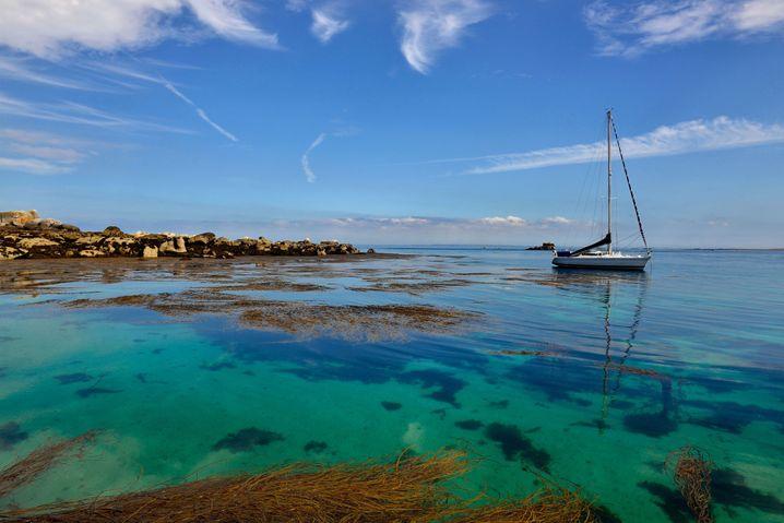Tourismusregion Bretagne: Die Nitratbelastung fördert die Bildung von Grünalgen an den Stränden, die bei ihrer Verwesung giftigen Schwefelwasserstoff bilden