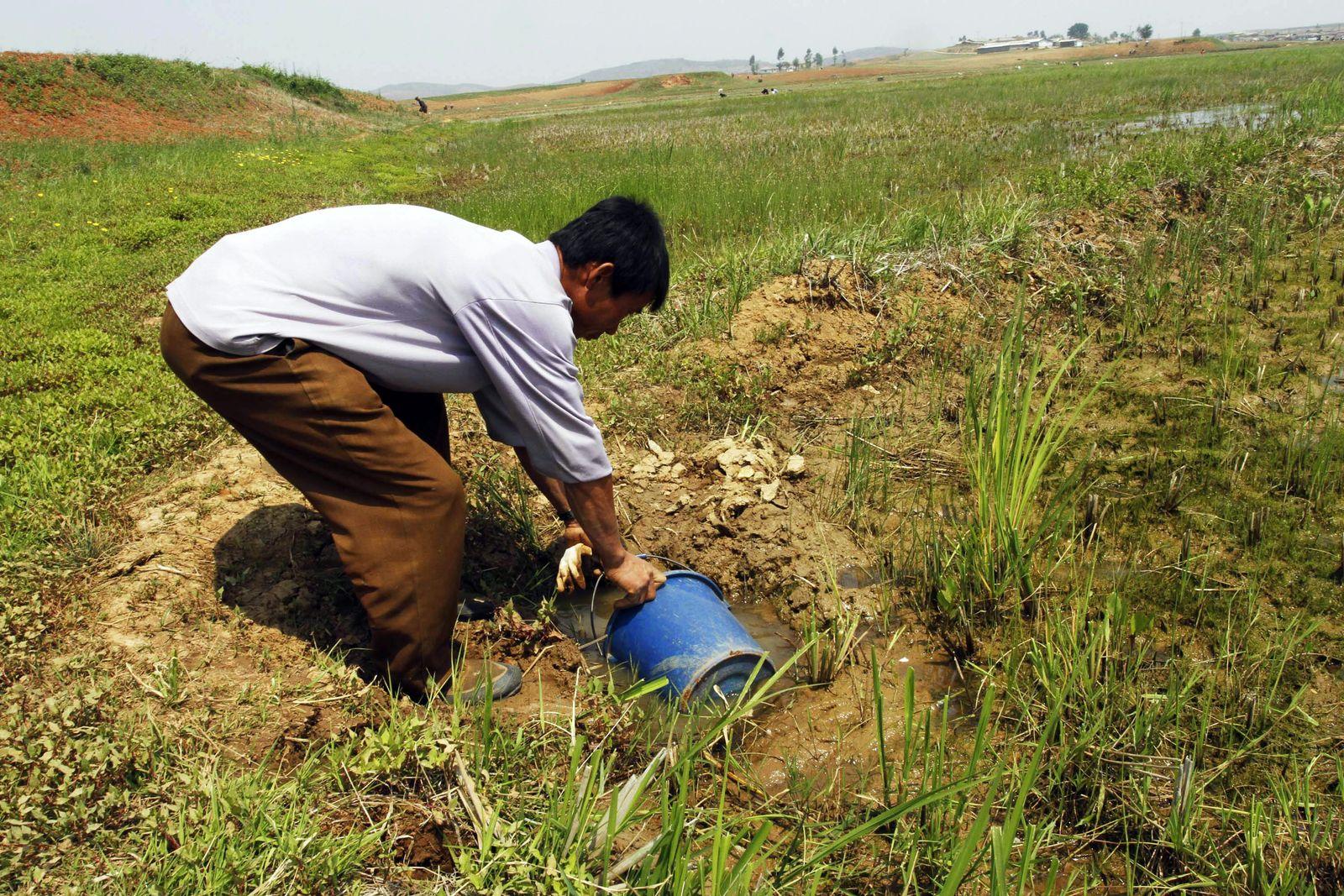 Landwirt Nordkorea