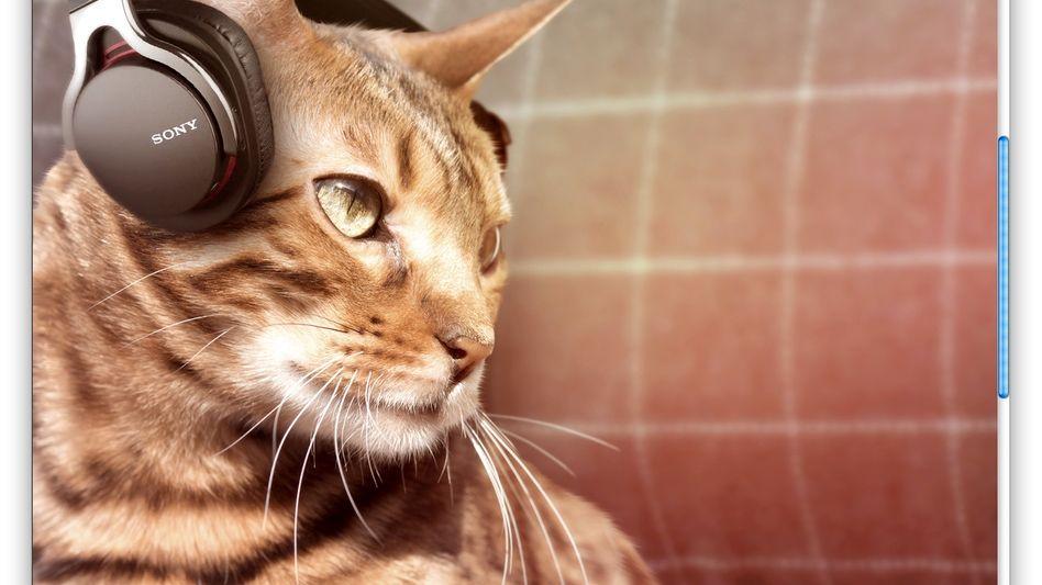 Katzen-Kopfhörer: Dieses Produkt gibt es exklusiv am 1. April für Twitter-Nutzer