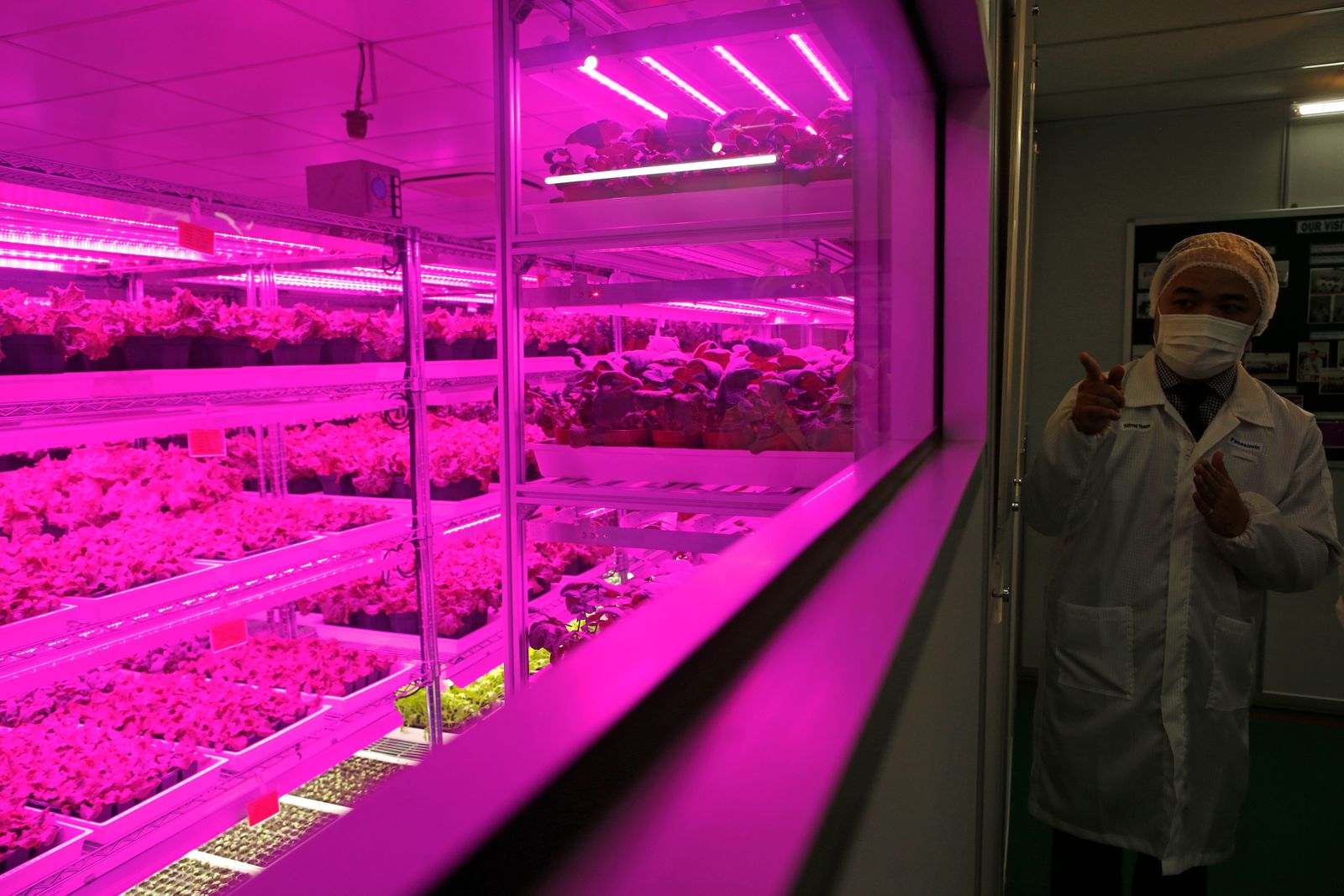 An employee gives a briefing before a tour of Panasonic's first indoor vegetable farm at their factory in Singapore