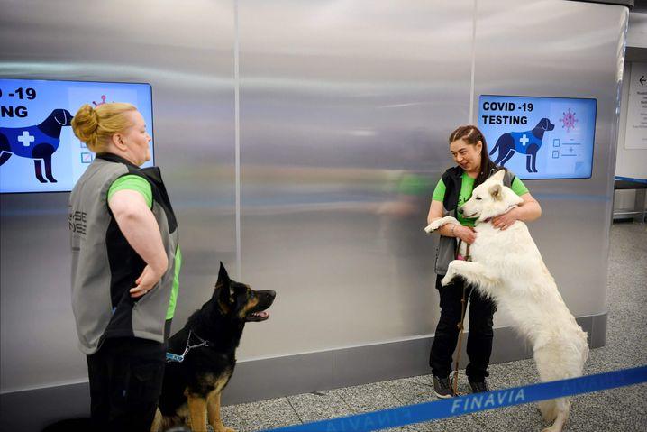 Die Spürhunde könnten in Krankenhäusern, Häfen, in Seniorenheimen, bei Sportveranstaltungen und kulturellen Ereignissen zum Einsatz kommen