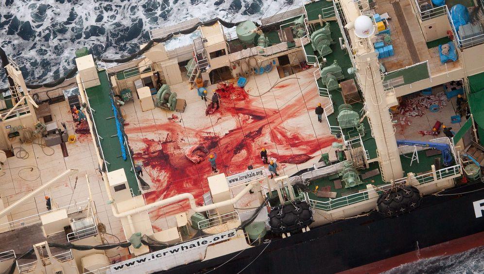 Japan auf Walfang: Wieder Jagd im Pazifik