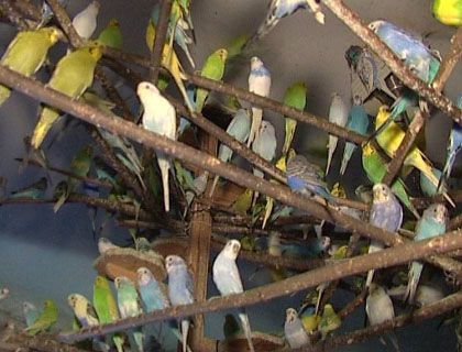 An apartment for the birds: An image from inside Gerhard Adam's flat in Spandau.