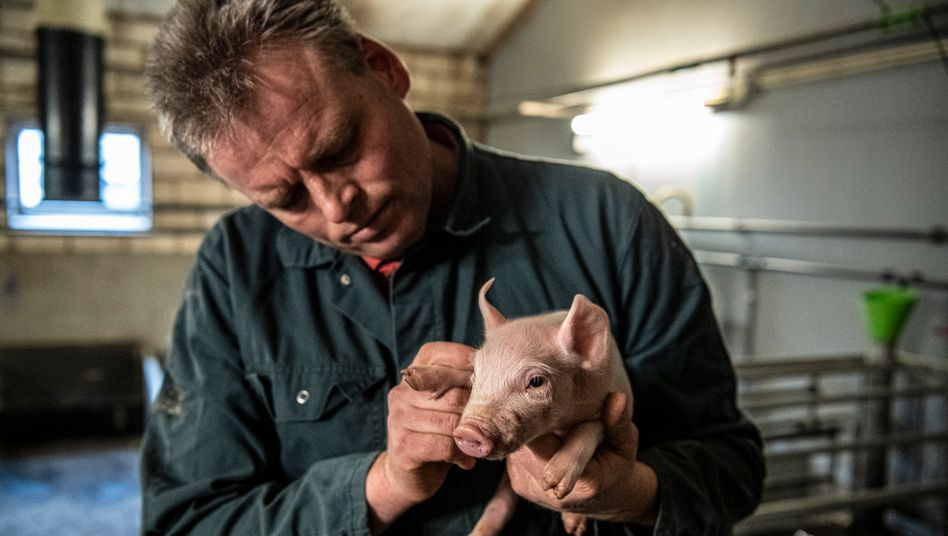 Niederländischer Bauer Eric Reijrink: Pflegeheim statt Schweinestall