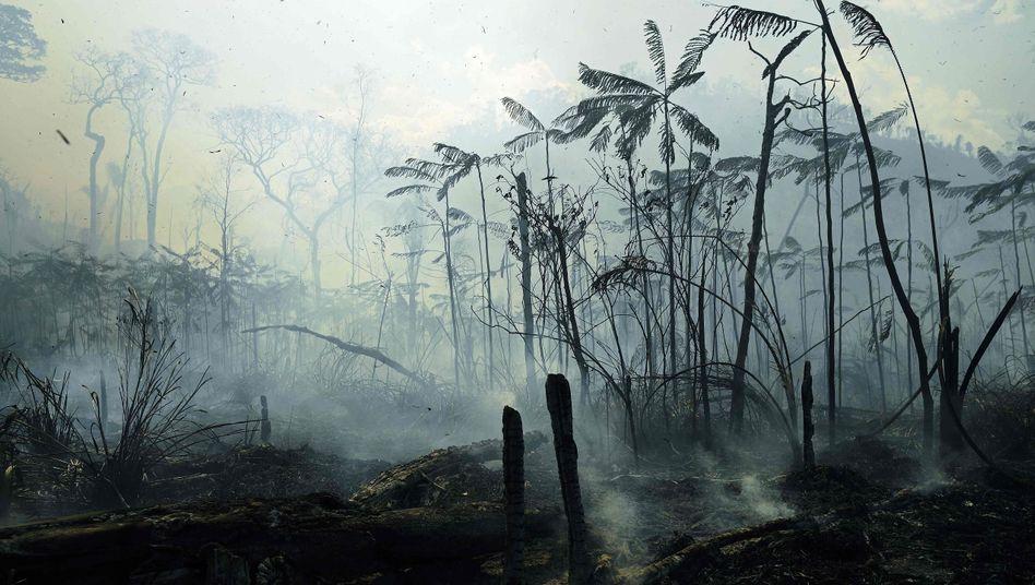 43 Millionen Hektar tropischen Regenwalds zerstört