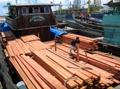Tropenholz aus Indonesien: Zu 80 Prozent illegal