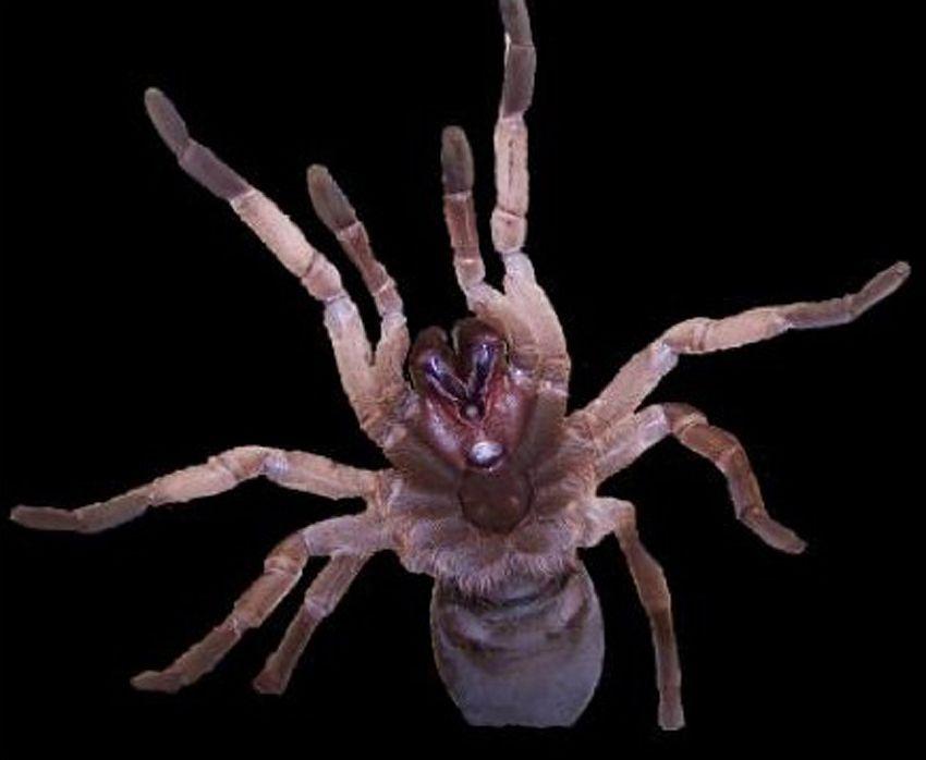 EINMALIGE VERWENDUNG Neuer Hoffnungsträger: Spinnengift gegen Pflanzenschädlinge