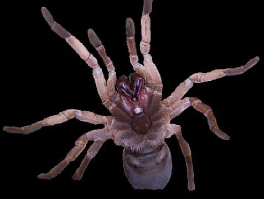 Spinnen gift gegen ▷ Spinnenvernichter