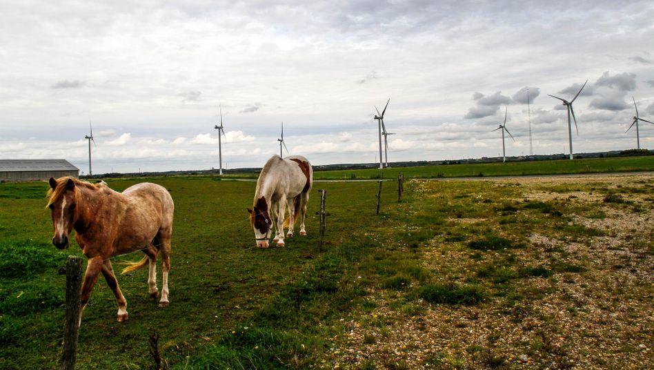 Pferde vor Windrädern in Dänemark