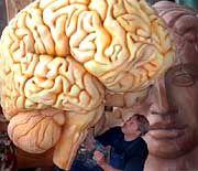Modell des Gehirns: Fest verdrahtete Grammatik?