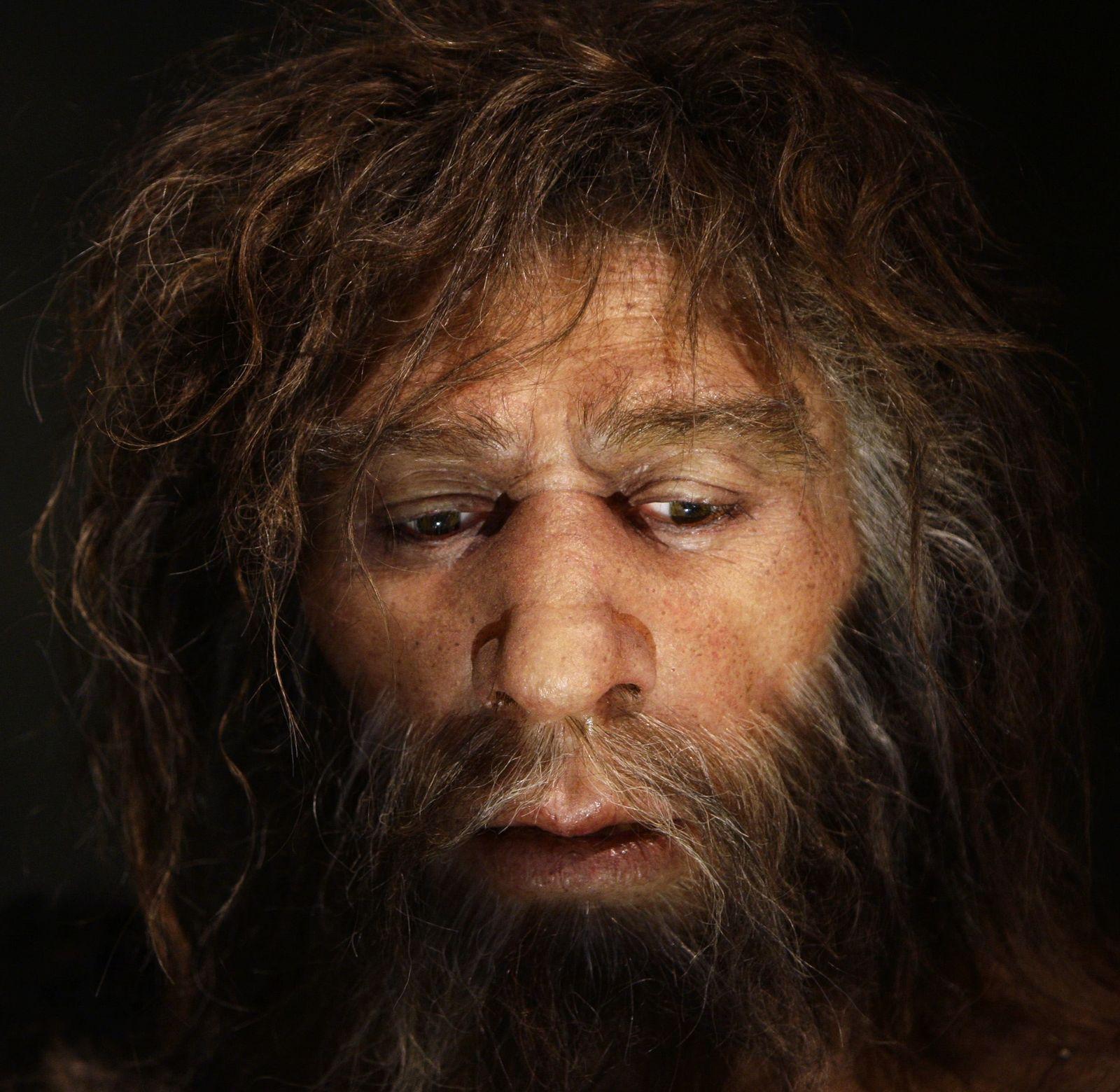Neandertaler / Neanderthal-Museum