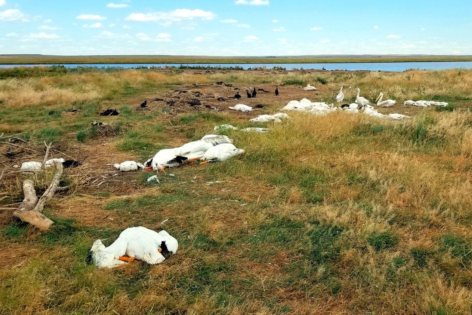 Birds Killed Hailstorm