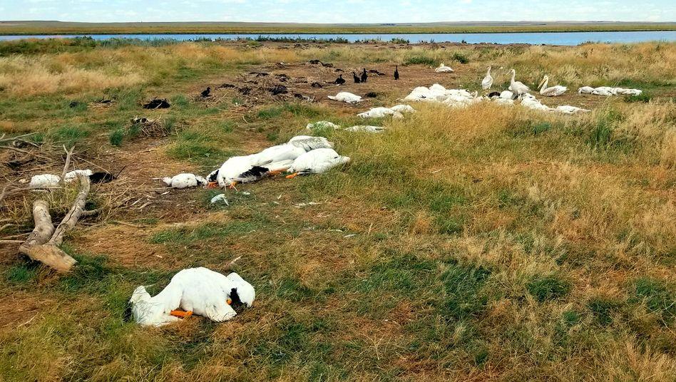 An einem See nahe der Stadt Billings im US-Bundesstaat Montana sind Tausende Vögel durch ein Unwetter ums Leben gekommen