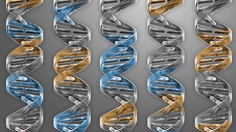 DNA: 473 Gene reichen aus