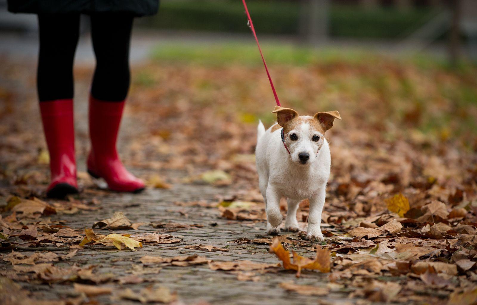 Symbol / Hunde / Herbst / Spazieren