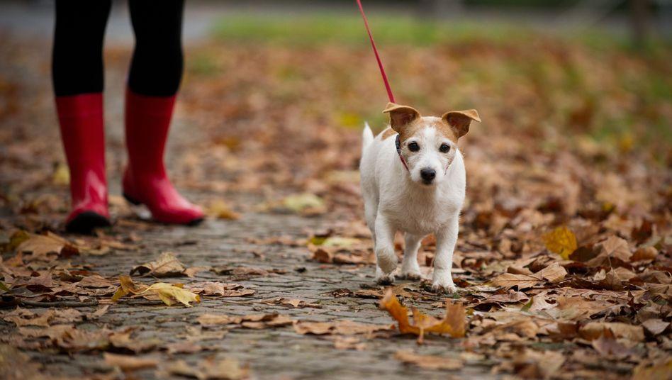 Spaziergang mit Hund: Die Stadt ist nicht immer die beste Umgebung für Hunde