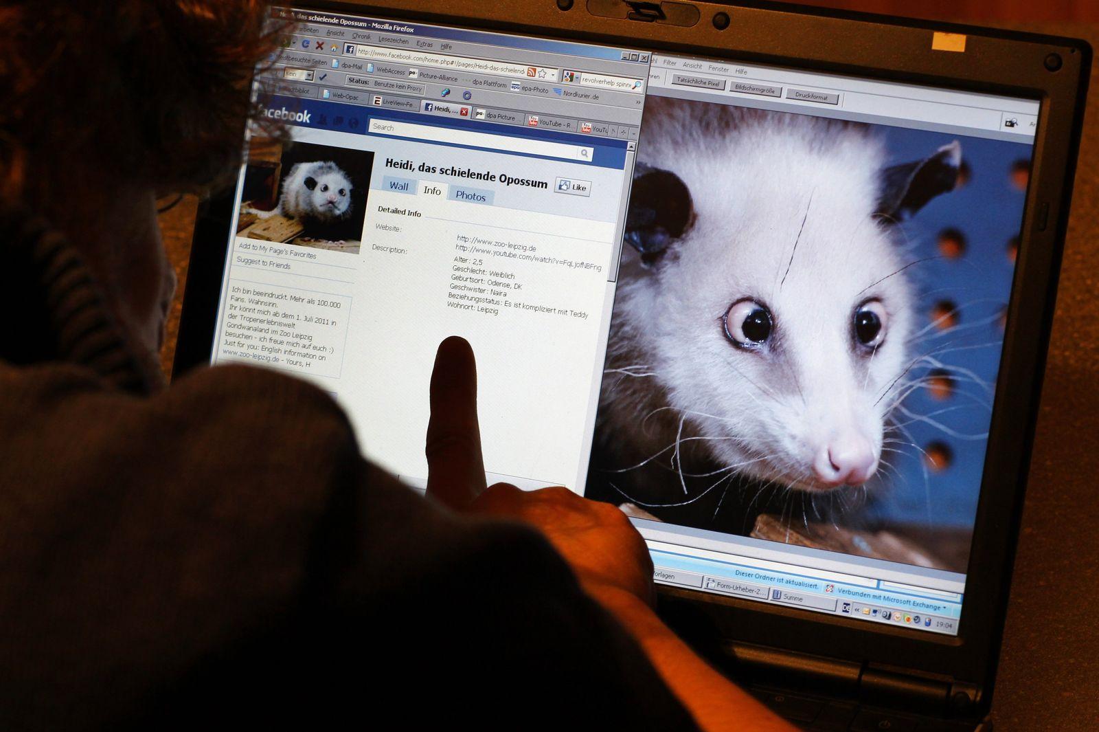 Facebookmj Opossum