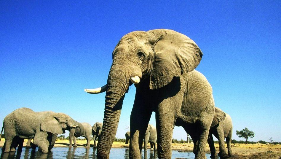 Afrikanische Elefanten an einer Wasserstelle