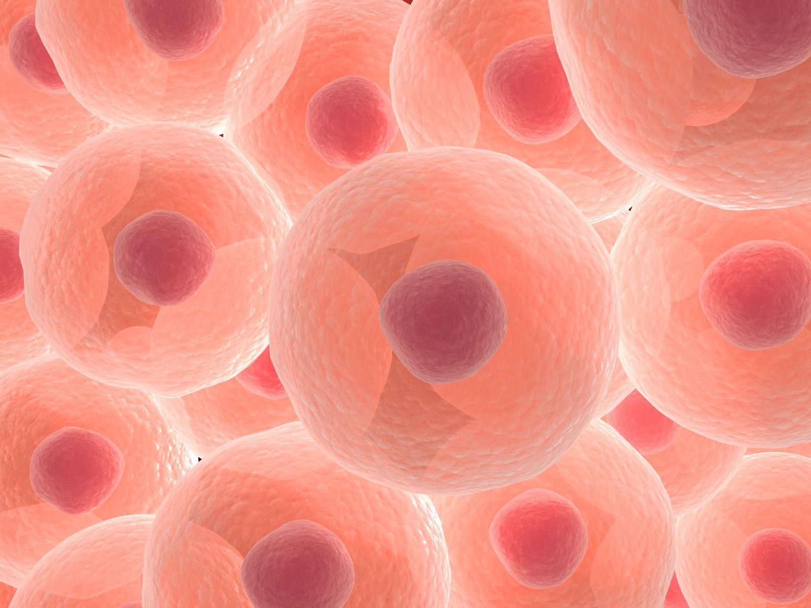 NICHT MEHR VERWENDEN! - Eukaryoten/ Zelle