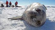 Antarktis-Kommission streitet über weltgrößte Schutzzone