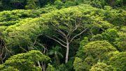 Regenwälder speichern bis zu 30 Prozent weniger CO2
