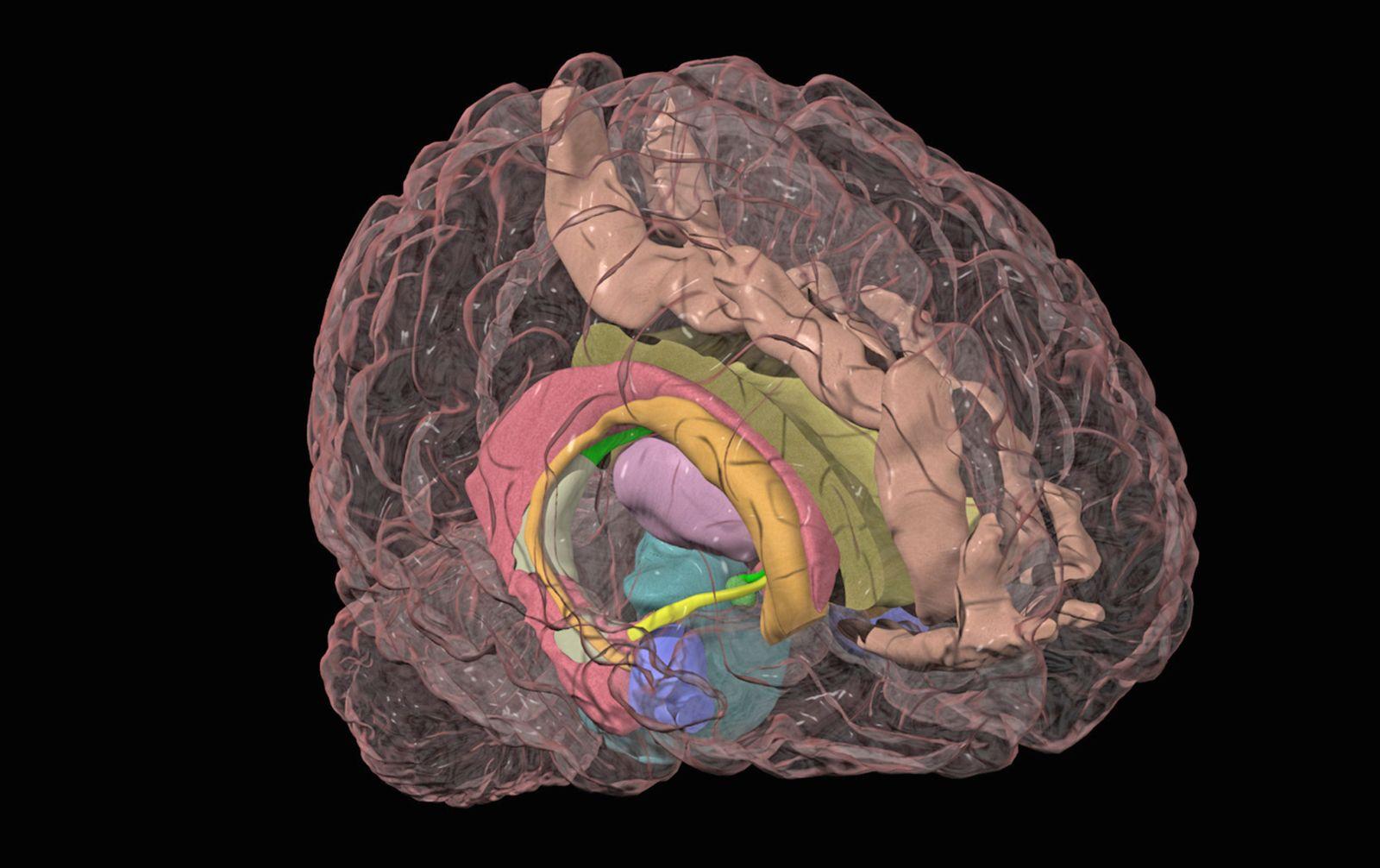 NICHT MEHR VERWENDEN! - Gehirn / Amygdala / Hirnforschung